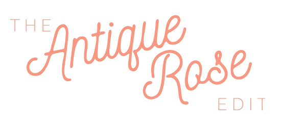 Antique Rose Blog